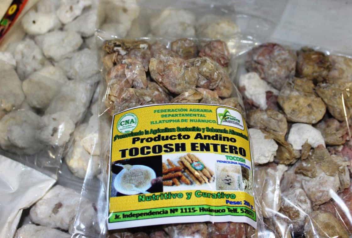 Natural Penicillin? The Peruvian Medicine Called Tocosh