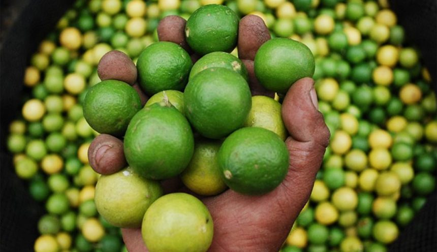 Peruvian Limes are Perfect for Ceviche!