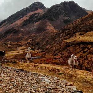 Lares Trek & Machu Picchu