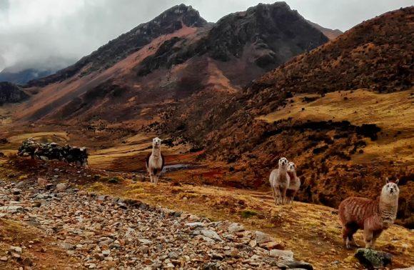 Randonnée Lares vers le Machu Picchu