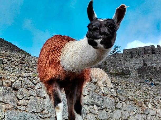 Huchuy Qosqo, Lares und Machu Picchu Tour