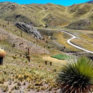 Puya Raimondii森林和奎斯瓦恰卡吊桥之旅