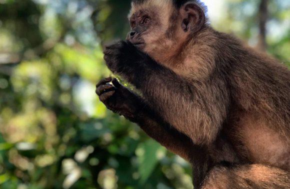 不走寻常路之秘鲁篇:踏入与世隔绝的Manu的亚马逊热带雨林